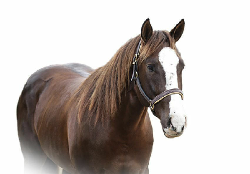 Picture for category Horse Equipment