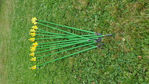 Picture of Wonderful arrows