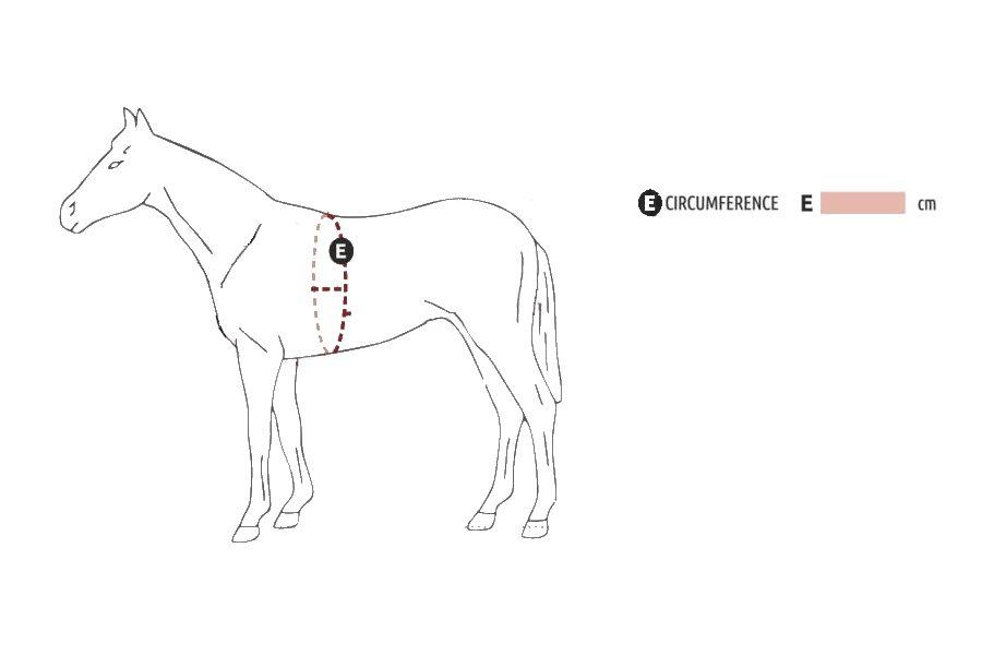 Horse Body Measurements